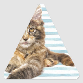 Cat, Maine Coon Triangle Sticker