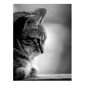 Cat Meditating Black and White Postcard