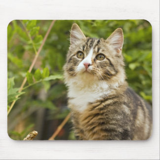 Cat Mouse Pad