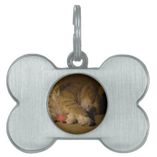 Cat Nap Pet Tag