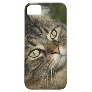 Cat Norwegian Forest Cat Sweet Domestic Cat Curiou Case For The iPhone 5