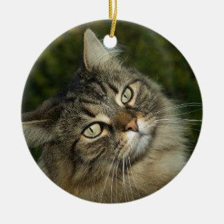 Cat Norwegian Forest Cat Sweet Domestic Cat Curiou Ceramic Ornament