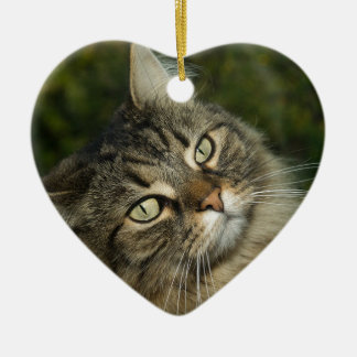Cat Norwegian Forest Cat Sweet Domestic Cat Curiou Ceramic Ornament