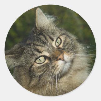 Cat Norwegian Forest Cat Sweet Domestic Cat Curiou Classic Round Sticker