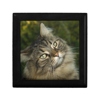 Cat Norwegian Forest Cat Sweet Domestic Cat Curiou Gift Box