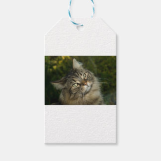 Cat Norwegian Forest Cat Sweet Domestic Cat Curiou Gift Tags