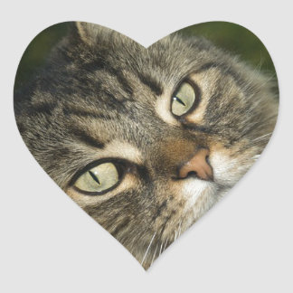 Cat Norwegian Forest Cat Sweet Domestic Cat Curiou Heart Sticker