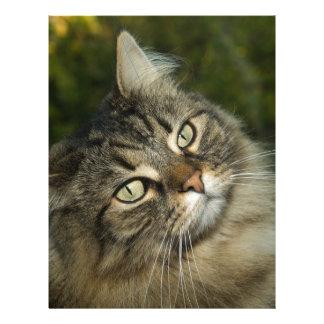 Cat Norwegian Forest Cat Sweet Domestic Cat Curiou Letterhead