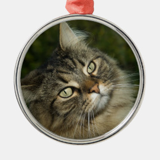Cat Norwegian Forest Cat Sweet Domestic Cat Curiou Metal Ornament