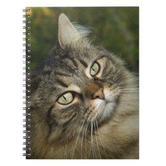 Cat Norwegian Forest Cat Sweet Domestic Cat Curiou Notebook