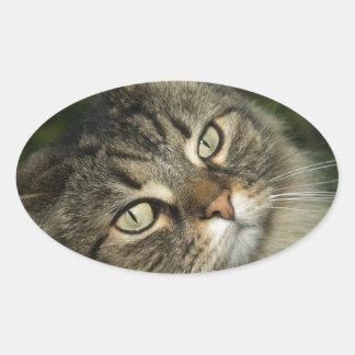 Cat Norwegian Forest Cat Sweet Domestic Cat Curiou Oval Sticker