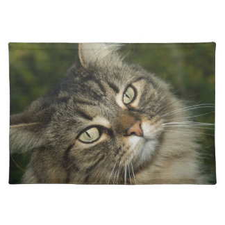 Cat Norwegian Forest Cat Sweet Domestic Cat Curiou Placemat