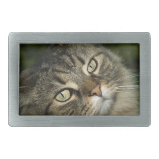 Cat Norwegian Forest Cat Sweet Domestic Cat Curiou Rectangular Belt Buckle