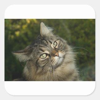 Cat Norwegian Forest Cat Sweet Domestic Cat Curiou Square Sticker