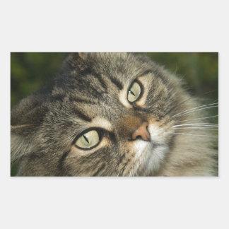 Cat Norwegian Forest Cat Sweet Domestic Cat Curiou Sticker