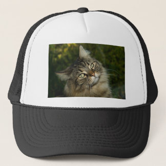Cat Norwegian Forest Cat Sweet Domestic Cat Curiou Trucker Hat