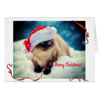 Cat of Christmas Card