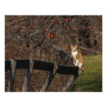 Cat On A Fence Photo Print