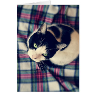 Cat on a Mat Photoprint Card