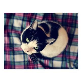Cat on a Mat Postcard
