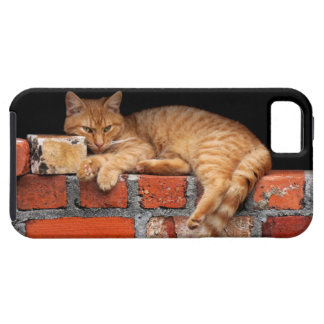 Cat on Brick Wall iPhone 5 Case