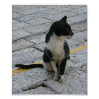 cat on pavement poster