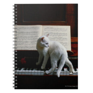 Cat on piano notebooks