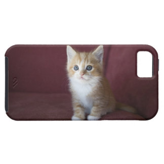 Cat on sofa case for the iPhone 5