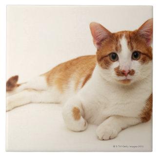 Cat on white background tile