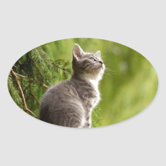 cat oval sticker