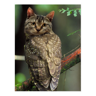 Cat Owl Postcard
