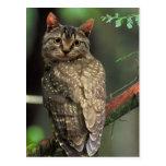 Cat Owl Postcards