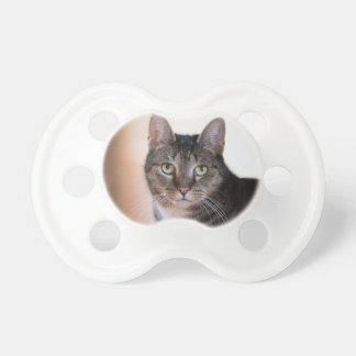 cat pacifier