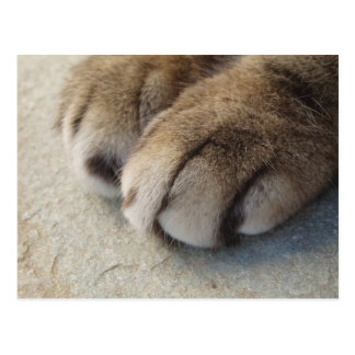 Cat Paws Postcard