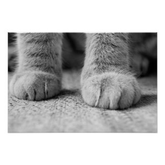 Cat Paws Print