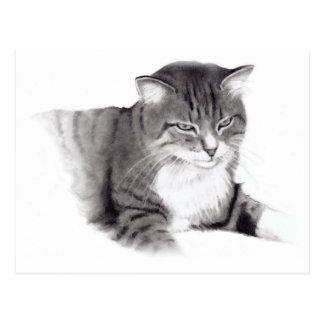Cat: Pencil Drawing: Original Art Postcard