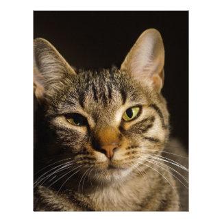 cat personalized letterhead