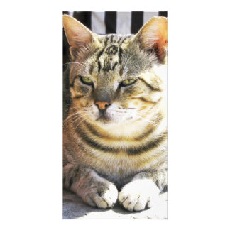 cat personalized photo card