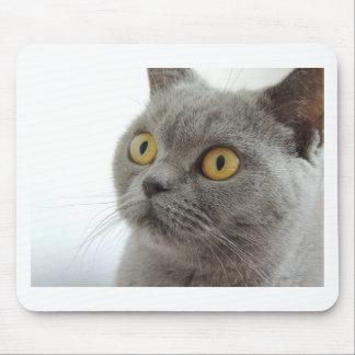 Cat Pet Animal Grumpy Frown Peace Love Destiny Mouse Pad