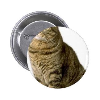Cat Pet lover animal special friend  kitten Buttons