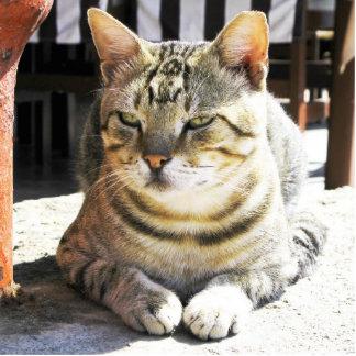 cat photo sculpture button