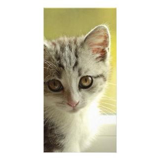 cat picture card