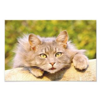 cat photo art