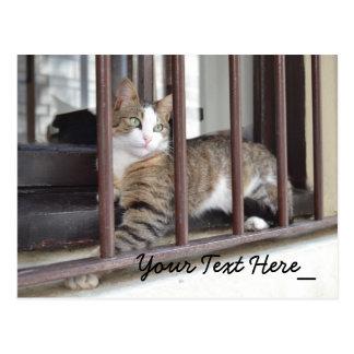 Cat Photography Postcard