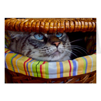 Cat Picnic Card