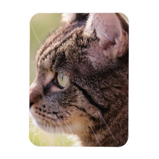 cat vinyl magnets