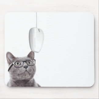 Cat presbyope and glasses looking at a mouse mouse pad
