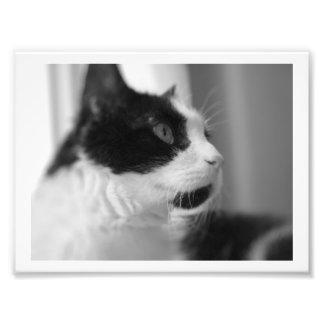 Cat Prints! Photo Print