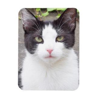 cat rectangular photo magnet