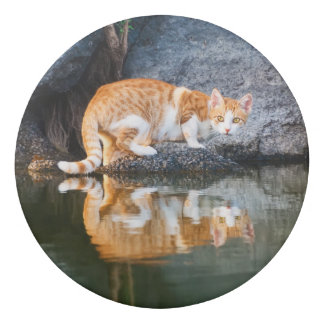 Cat Reflection in Pond Water Funny Kitten Photo ; Eraser
